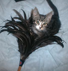 Adelaide and the feather duster